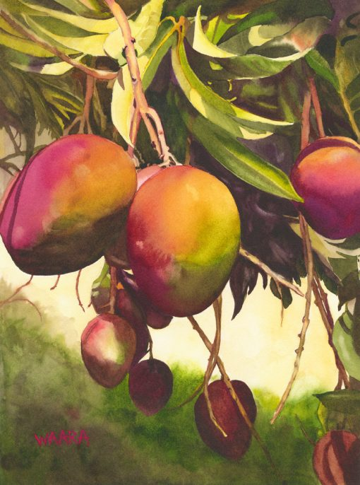 Mango Tango watercolor of red mangos