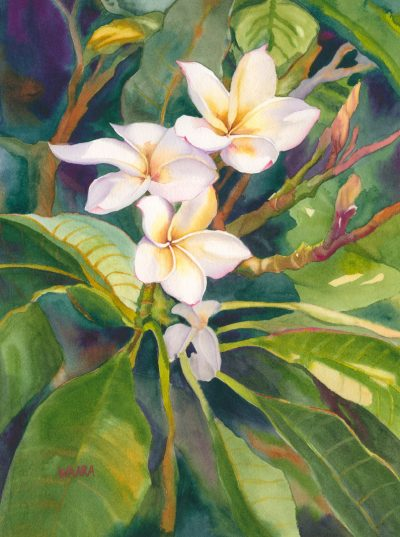 Fragrance watercolor of plumeria