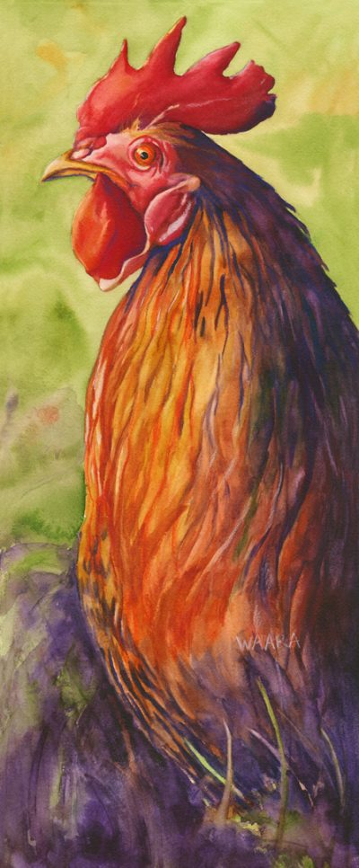 Mr. Bach Bigock Watercolor of rooster
