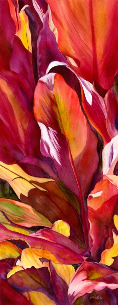 Red Ti, Set, Go watercolor painting or red ti leaves