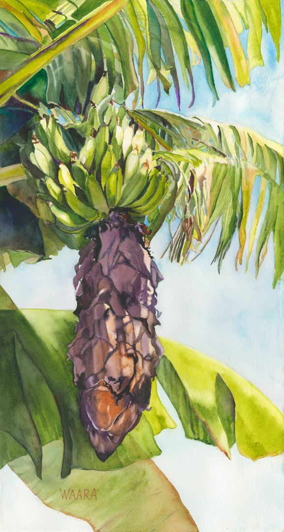 Banana Bunch watercolor