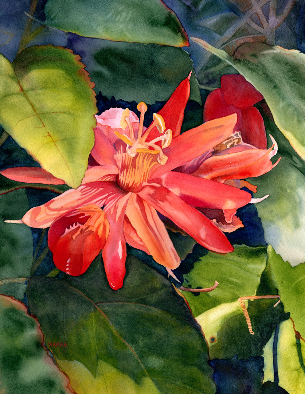 Passion Flower (lilikoi) by watercolor artist Christine Waara