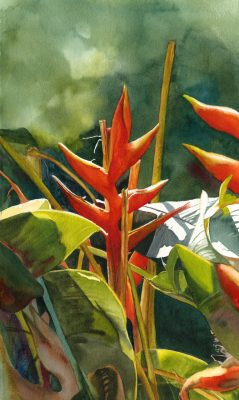 "Original watercolor painting ""Hidden Gem"" of crab claw heliconia by Maui artist Christine Waara"