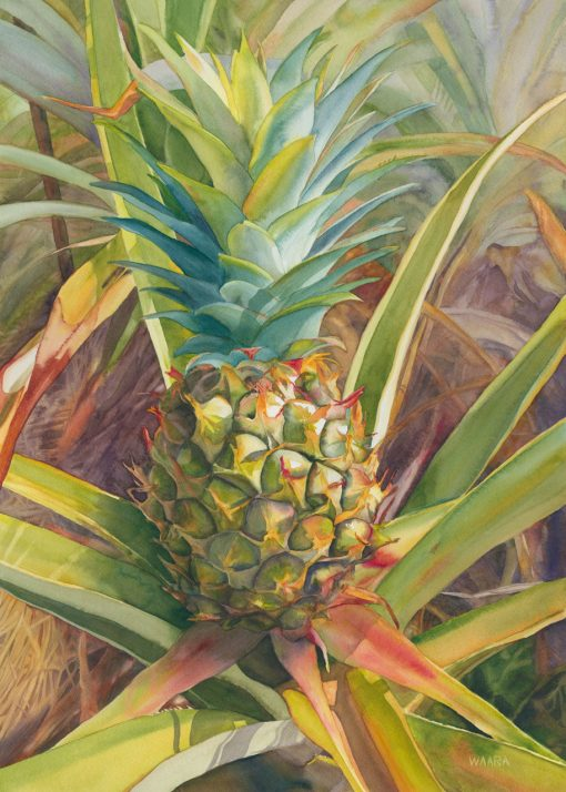Original watercolor painting of Haliimaile Pineapple by Maui artist Christine Waara