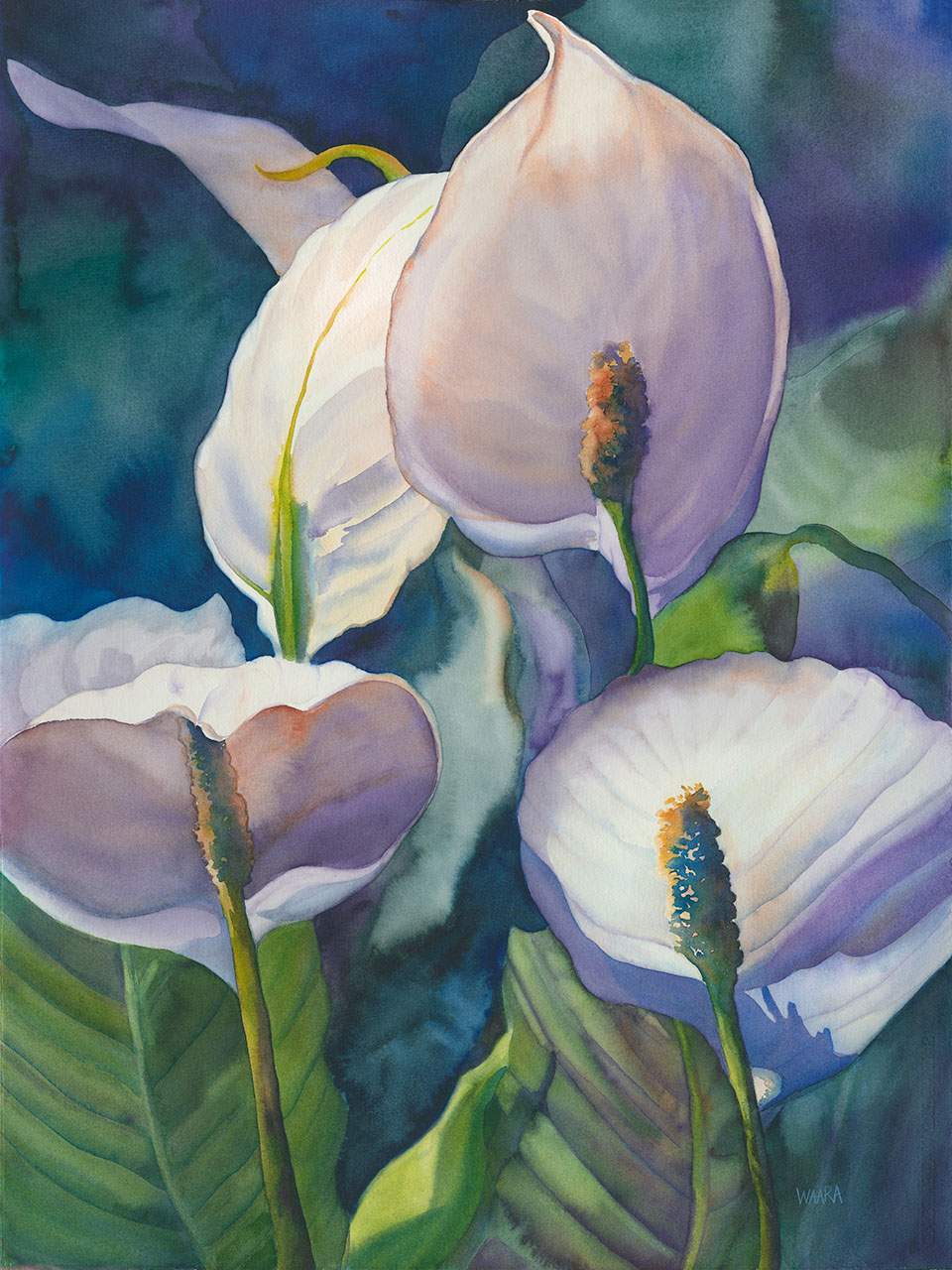 "Original watercolor ""Shade Lovers"" of white anthurium by Maui artist Christine Waara"