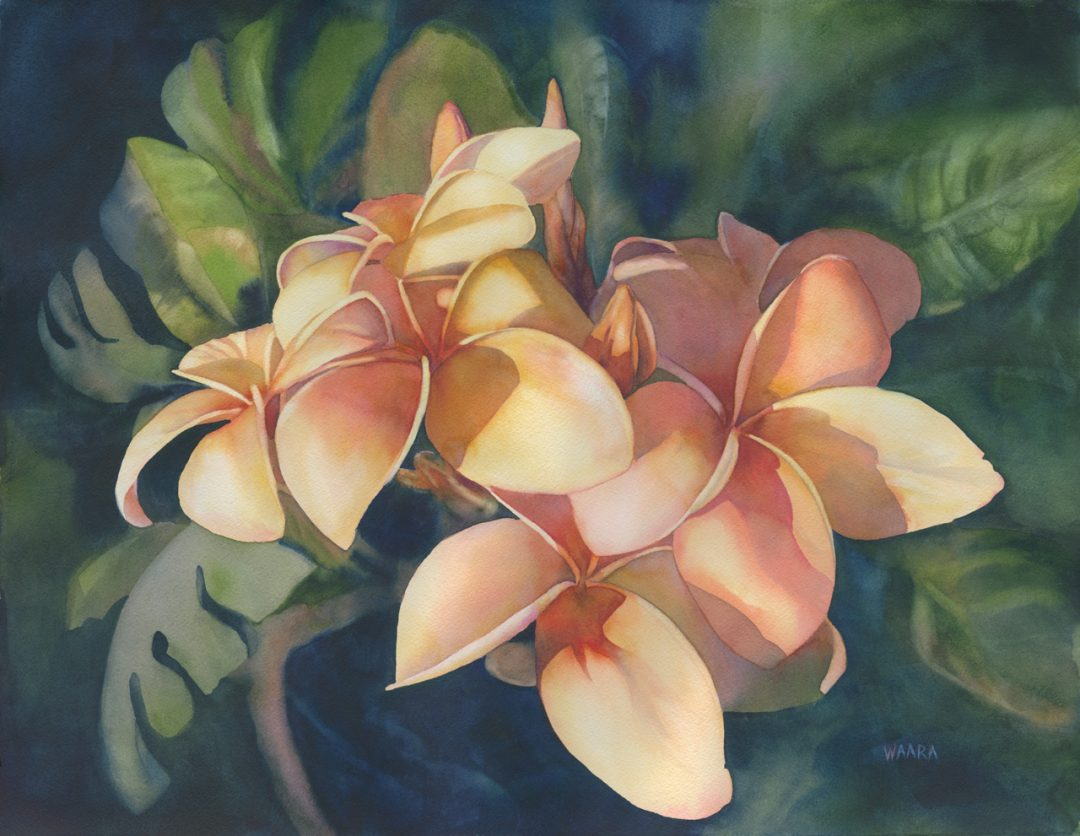 "Original watercolor painting ""Soft Petal"" of white plumeria flowers by Maui artist Christine Waara"