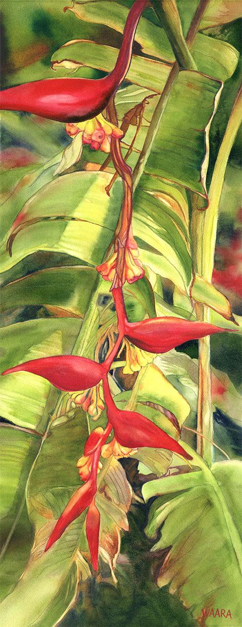"""Hanging Helliconia"" aka ""Firelight"" original watercolor painting by Maui artist Christine Waara"